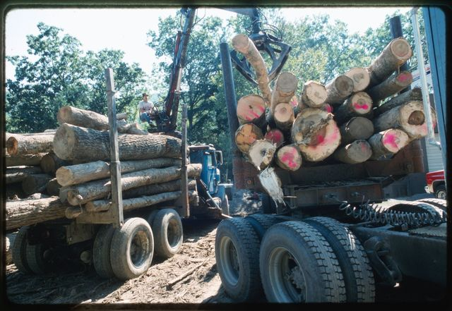 Logging transport operation, Naoma, West Virginia