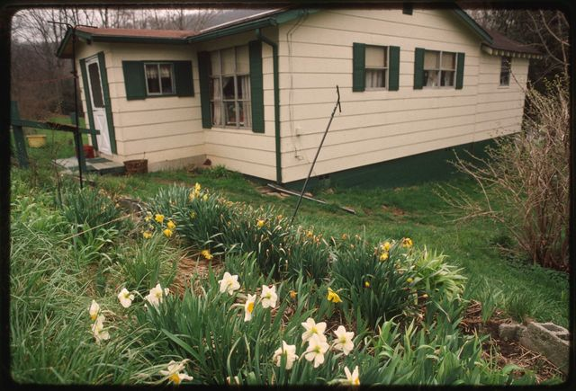 Exterior of Mae Bongalis' home, with daffodils blooming on the bank