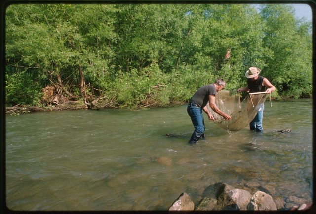 Ray Cottrell and Randy Sprouse (in hat) seine for hellgrammites in the Trap Stewart Hole near the mouth of Hazy Creek