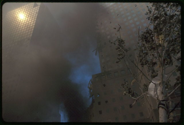 [Tree cluttered with debris in front of a building obscured by smoke, following September 11th terrorist attack on World Trade Center, New York City]