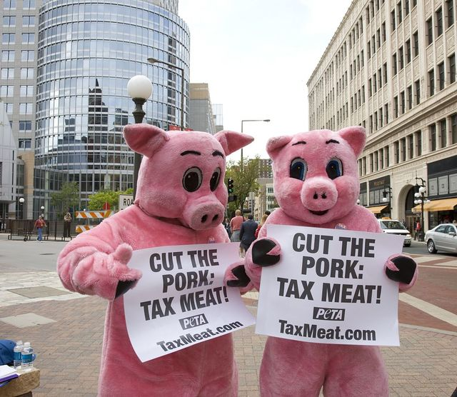 Republican National Convention, September 1-4, 2008. Protesters dressed as pigs want more taxes on meat, near the Xcel Center, St. Paul, Minnesota