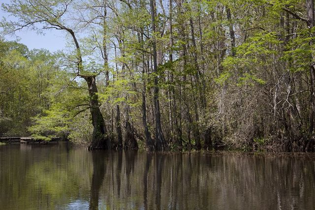 A canoe trip up the Mobile Delta, which consists of approximately 20,323 acres of water just north of Mobile Bay, Alabama