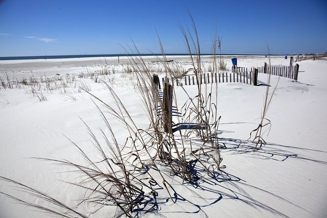 Beach Scene on Dauphin Island, Alabama