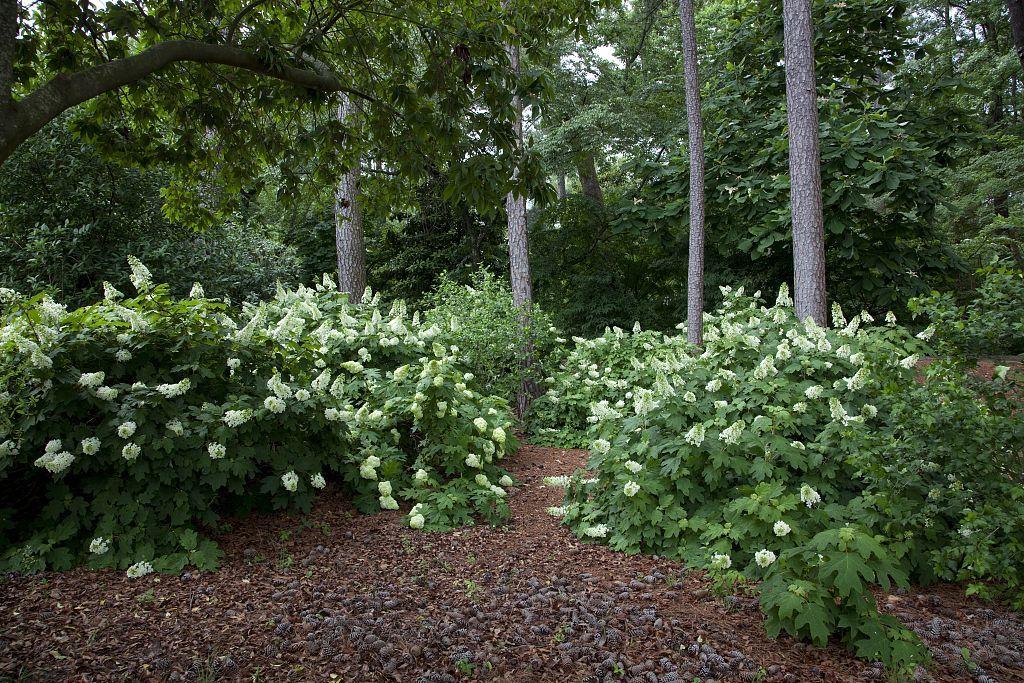 Birmingham Botanical Gardens, Birmingham, Alabama - look and ...
