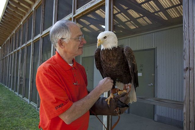 Roy Clay Crowe poses with eagles who are brought into the Southeastern Raptor Rebilitation Center, University of Auburn, Alabama