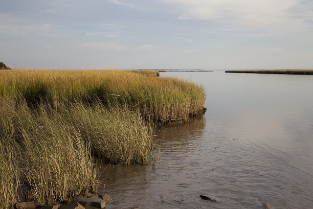 [Looking out over the marshes in Long Island Sound near Westport, Connecticut]
