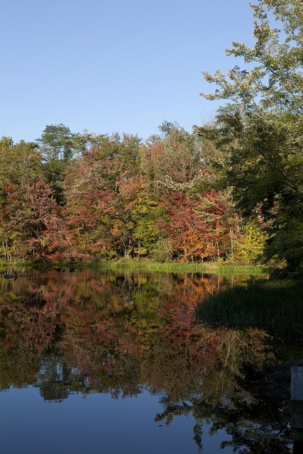 Pond in Essex, Connecticut