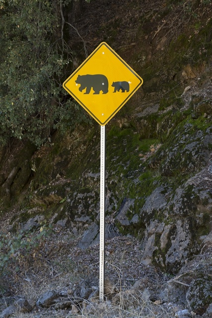 Beware of bears crossing the road sign in Northern California mountains