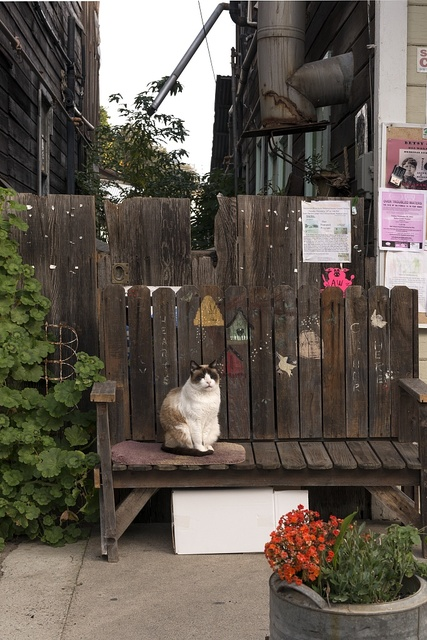 Cat on a bench in Locke, an unincorporated community in the Sacramento/San Joaqin River Delta in California