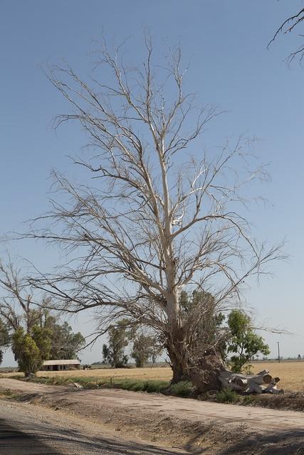 Farming in the El Centro region in California