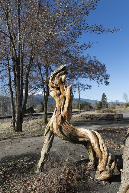 Gnarled wood, with the appearance of driftwood, in a corner lot of the town of Mt. Shasta, near the famous mountain of the same name in Siskiyou County, California