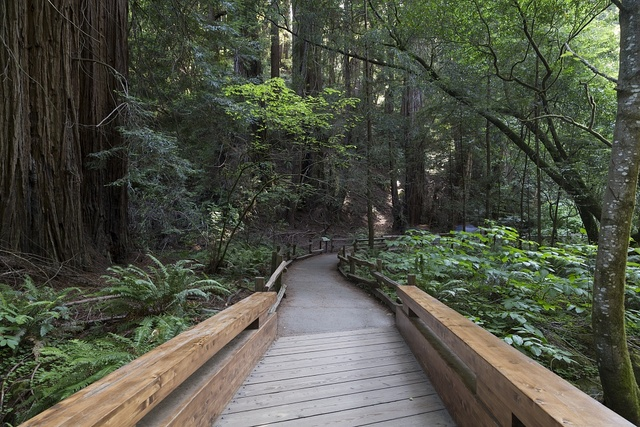 Muir Woods National Monument, located on the Pacific coast of southwestern Marin County, California