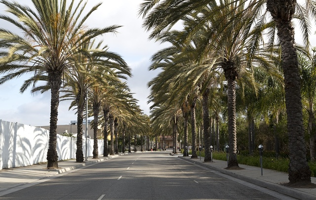 Palm lined street in Los Angeles, California