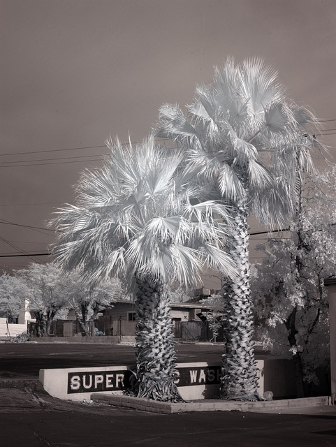 Palm trees in Barstow, California