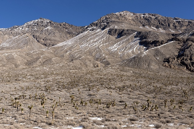 "This is obviously not the stereotypical sun-parched summer day in Death Valley. Snow dots the ground amid a field of cacti along the dead-end road to a playa known as the ""Racetrack,"" a dry lakebed known for its rocks that mysteriously move, from time to time, along the surface"