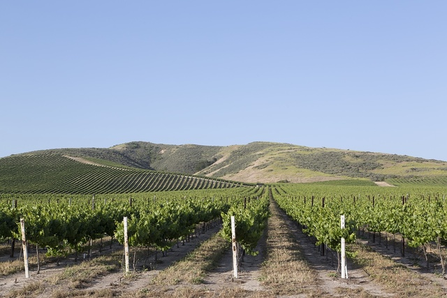 [Vineyards in the Paso Robles area of California]
