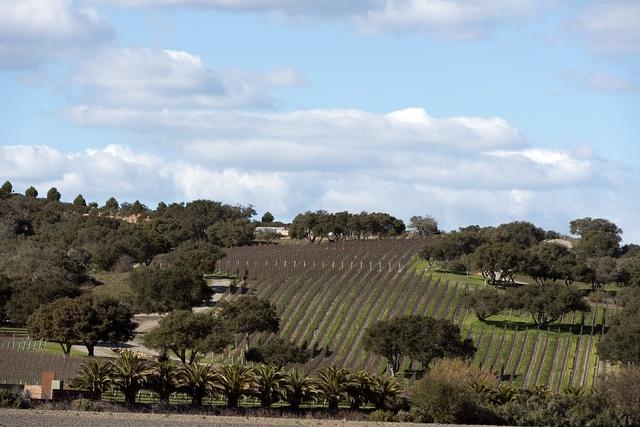 Crop rows in San Luis Obispo County, California