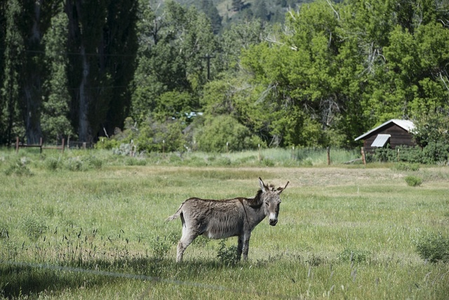 Scenic view: donkey in Northeast California