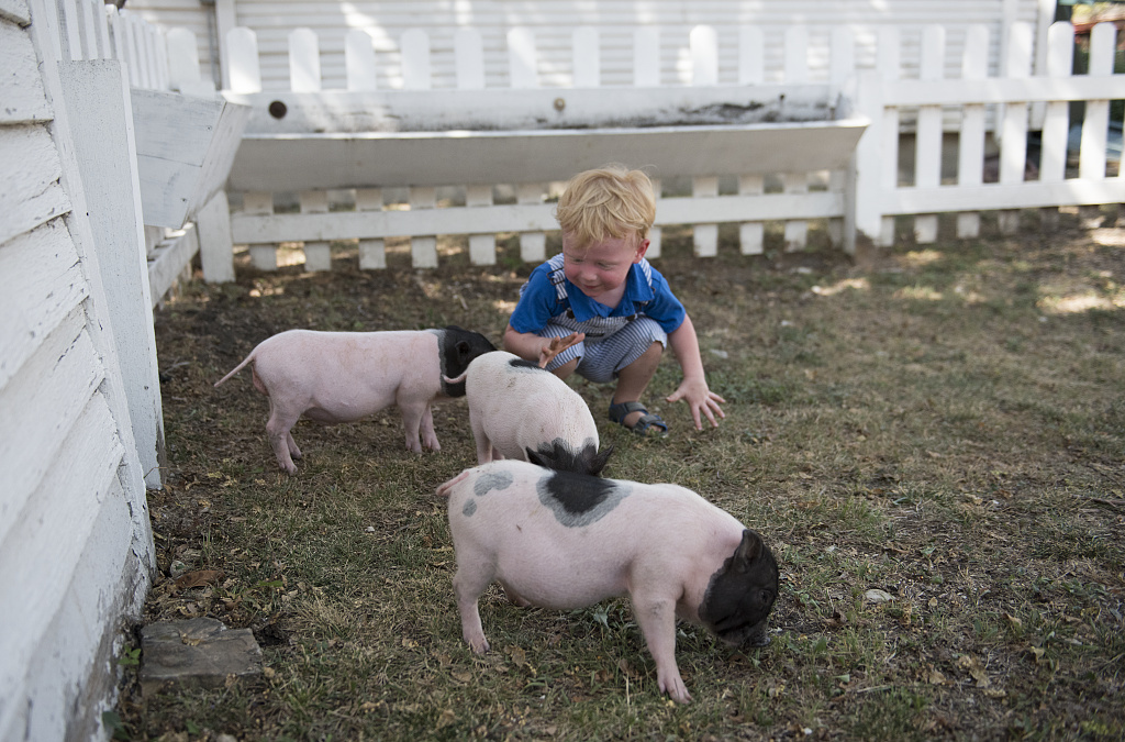 2-year-old Gavin Olson of Savannah, Texas, a visitor to the Heritage Farmstead Museum, feeds piglets at the living-history site interpreting the Texas Blackland Prairie region in North Texas in Plano, a northern suburb of Dallas, Texas