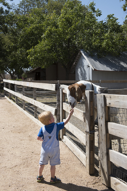 2-year-old Gavin Olson of Savannah, Texas, feeds a friendly goat at the Heritage Farmstead Museum, a living-history site interpreting the Texas Blackland Prairie region in North Texas in Plano, a northern suburb of Dallas, Texas