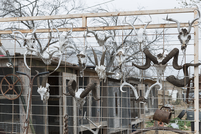 Animal horns serve as a fence decoration outside this property in tiny Bracketville, the county seat of Kinney County, Texas