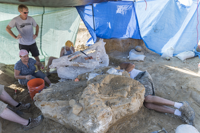 Archaeological dig on the site of the discovery of a Columbian mammoth near Italy, Texas