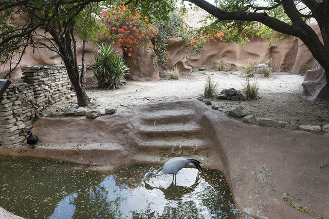 Birds at an oasis in the Gladys Porter Zoo in Brownsville, Texas