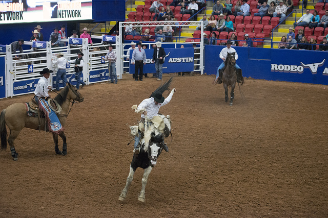 Bronc riding at Rodeo Austin, that city's annual rodeo, stock show, performance event, and carnival. Austin, Texas