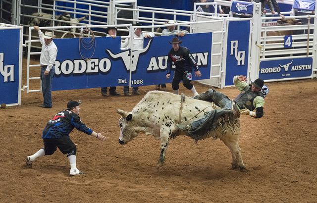 Bull throws its rider at Rodeo Austin, the city's annual stock show and rodeo. Austin, Texas