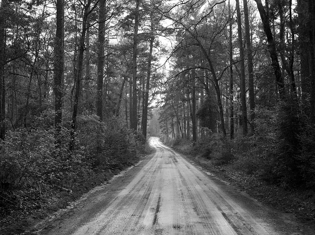 Dirt road through the Polk County portion of Big Thicket National Preserve, a U.S. Park Service area set aside to protect plants and wildlife in the swampy Big Thicket, a heavily forested corner of Southeast Texas
