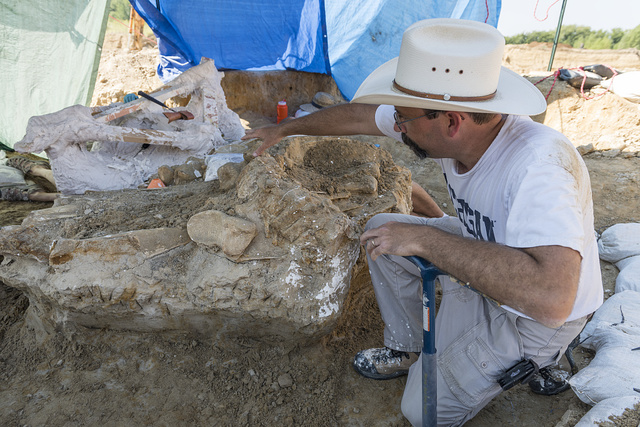 "Dr. Ronald S. Tykoski, a ""fossil preparator"" at the Perot Museum of Nature and Science in Dallas, Texas, leads an archaeological dig on the site of the discovery of a Columbian mammoth near Italy, Texas"