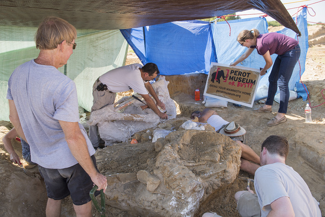 """Dr. Ronald S. Tykoski (mustachioed man in the background), a """"fossil preparator"""" at the Perot Museum of Nature and Science in Dallas, Texas, leads an archaeological dig on the site of the discovery of a Columbian mammoth near Italy, Texas"""