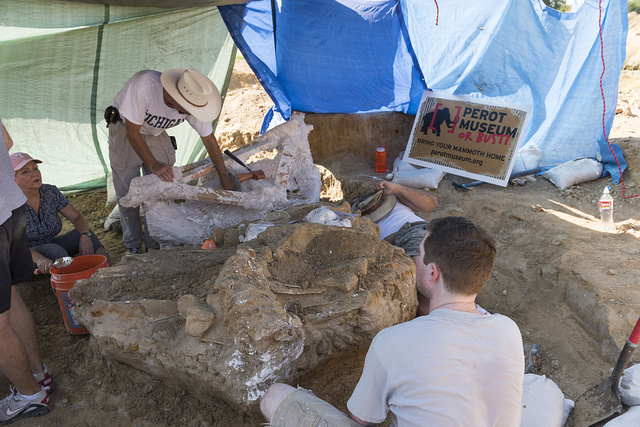 "Dr. Ronald S. Tykoski (mustachioed man in the cowboy hat), a ""fossil preparator"" at the Perot Museum of Nature and Science in Dallas, Texas, leads an archaeological dig on the site of the discovery of a Columbian mammoth near Italy, Texas"
