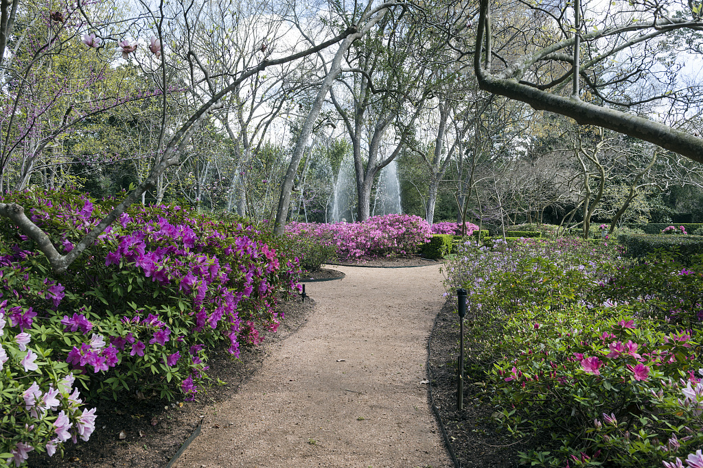 Garden Path And Blooming Azaleas At The Bayou Bend Collection And