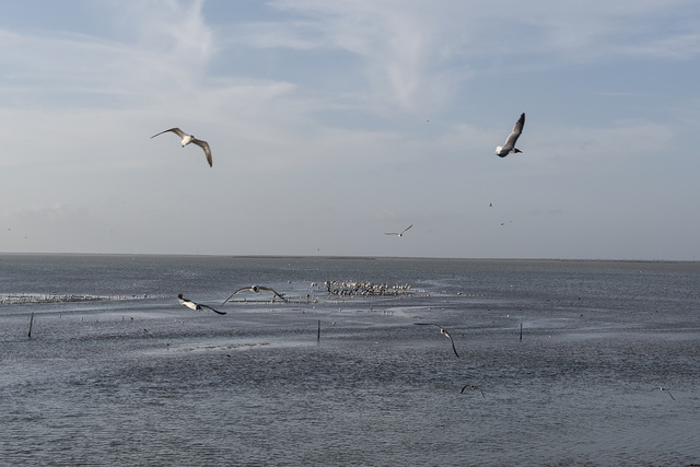 Gulls and other birds cavort in the air and in a spit of land in South Bay, below the long causeway that connects Brownsville and Port Isabel in Cameron County, Texas