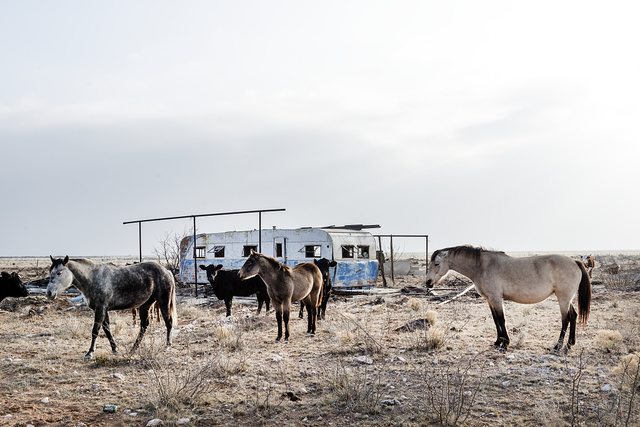 Horses alongside the road between tiny Wink and equally tiny Pyote in far-west Texas