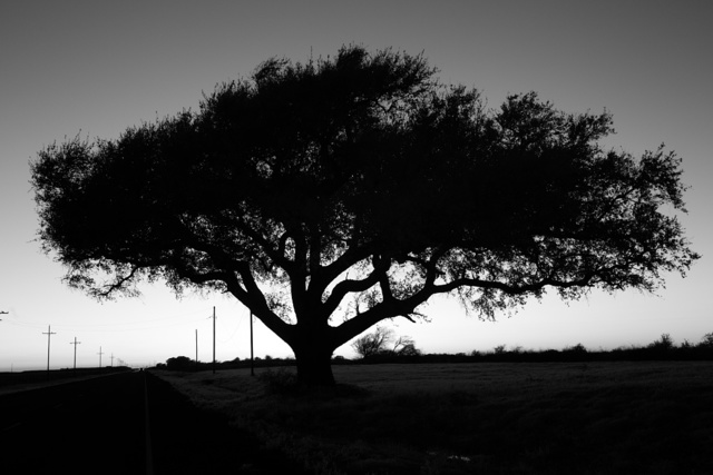 Lone tree silhouetted at sunset in the Texas Point National Wildlife Refuge in Jefferson County, Texas