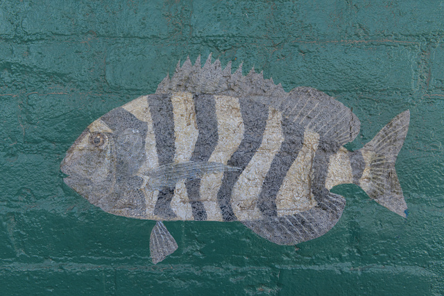 "Part of an elaborate ""fish mural,"" painted in 1906 by a local (reputedly one-armed) fisherman on the acade of the Champion Building, Port Isabel, Texas"