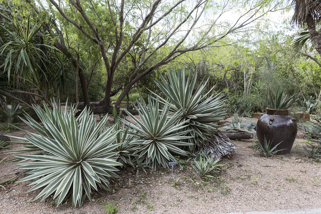 Part of the grounds at Quinta Mazatlan, a historical adobe mansion and nature and birding center in McAllen, Texas