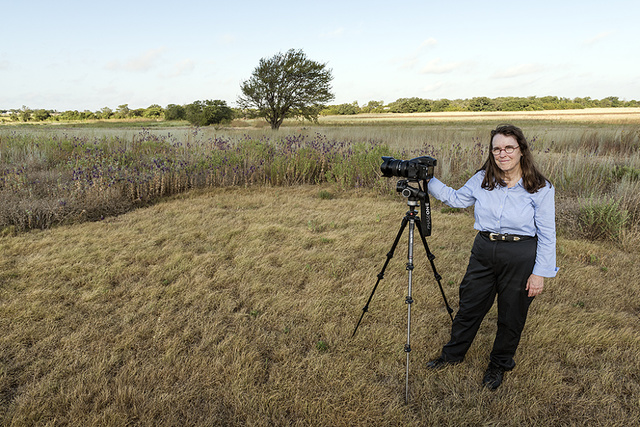 Photographer Carol M. Highsmith creates a visual record of a portion of the Prairie Chapel Ranch in McLennon County, near Crawford, Texas, owned by former president George W. Bush and former first lady Laura Bush. In this field, they are helping to bring back a tiny part of what was once a tallgrass prairie so vast that it stretched from mid-Texas northward into Canada