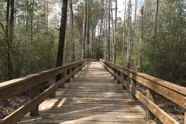 Plank walkway in Big Thicket National Preserve, a U.S. Park Service area set aside to protect plants and wildlife in the swampy Big Thicket, a heavily forested corner of Southeast Texas