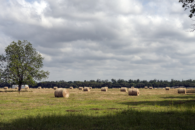 Rural scene in Fort Bend County, Texas, southwest of Houston