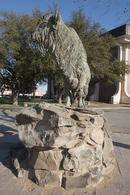 "This statue of an American bison outside the Scurry County Courthouse in Snyder, Texas, is dedicated to J. Wright Mooar, a ""champion hunter of buffalo"" in the Texas Panhandle"