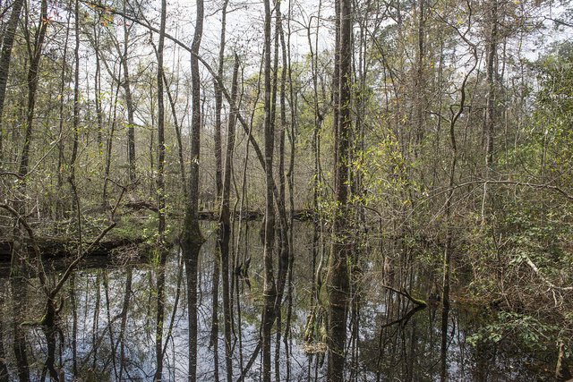 Watery portion of Big Thicket National Preserve, a U.S. Park Service area set aside to protect plants and wildlife in the swampy Big Thicket, a heavily forested corner of Southeast Texas