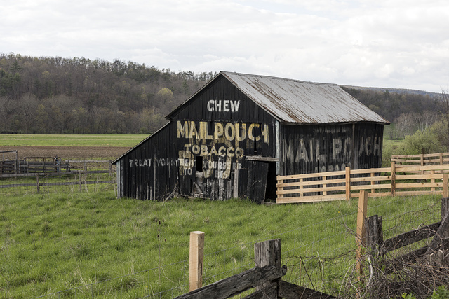 Classic Mail Pouch barnside advertisement in rural Hampshire County, West Virginia, near Romney