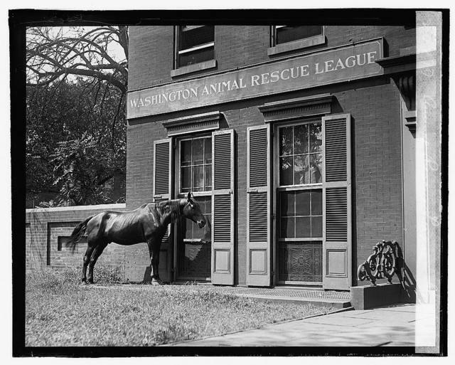 Animal Rescue League, 8/28/22