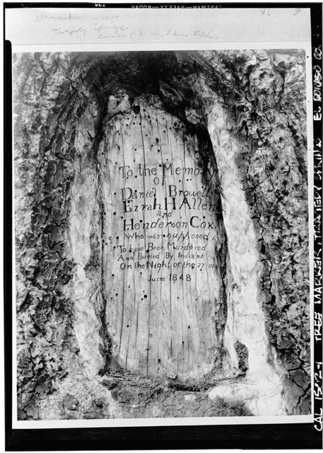 Carved Tree Marker, Tragedy Spring (historical), Amador County, CA