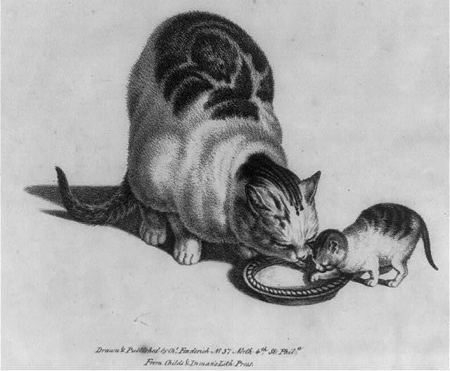 [Cat and kitten drinking milk]