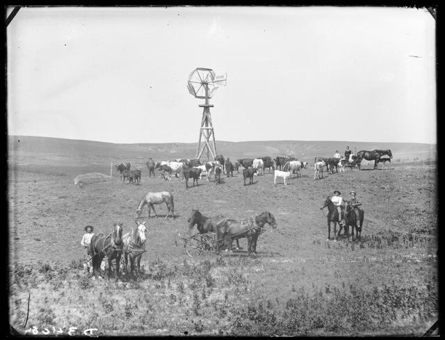 Cattle ranch in northwest part of Custer County, Nebraska.