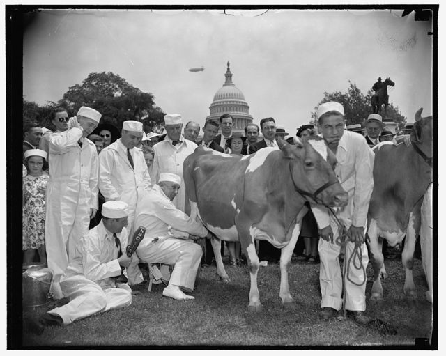 Congressional milking contest declared draw. Washington, D.C., June 9. The four congressmen competing for mlking championship of the 75th Congress today on the Capitol plaza deserted their cows to make speeches when the discovered a microphone nearby. Halting the contest in mid-squirt, Rep. Marvin Jones, acting as referee, declared it a draw after the contestants could show no more than a pint of milk for ten minutes of effort. Left to right: Rep. harry R. Sheppard, Calif.; Rep. Gerald J. Boileau, Wisconsin; Rep. Walter M. Pierce, Oregan; Rep. harold Knutson, Minnesota. Radio announcer Lee Everett holding the mike[mic], 6/9/38
